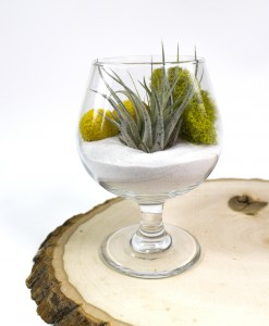 moss love air plant terrarium